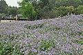 2014-04-04 石象湖 郁金香 liuzusai - panoramio (85).jpg