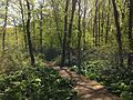 2014-05-11 11 13 06 View along the Doctors Creek Trail in Clayton Park, Upper Freehold Township, New Jersey.JPG