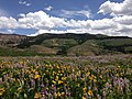 2014-06-24 12 17 54 View east across a field of wildflowers towards the Fox Creek Mountains from Elko County Route 748 (Charleston-Jarbidge Road) on the east side of Copper Basin, Nevada.jpg