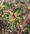 2015.08.22 11.57.08 IMG 0259 - Flickr - andrey zharkikh (cropped).jpg