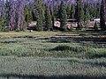 2016.07.27 09.03.00 DSC05416 - Flickr - andrey zharkikh.jpg