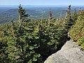 2017-09-11 11 13 25 View west along the Maple Ridge Trail at about 3,190 feet above sea level on the western slopes of Mount Mansfield within Mount Mansfield State Forest in Stowe, Lamoille County, Vermont.jpg