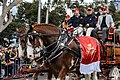 2017 AFL Grand Final parade – Clydesdales.1.jpg
