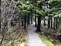 2019-10-27 12 03 53 View northeast along the Whispering Spruce Trail within a Red Spruce grove just southwest of Spruce Knob in Pendleton County, West Virginia.jpg