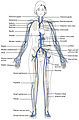 2131 Major Systematic Veins.jpg