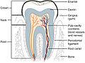 2409 Tooth.jpg
