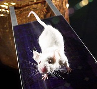 Unclean animal - Mouse