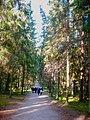 673. Mikhailovskoye. Spruce alley.jpg