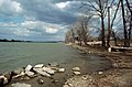 88c236 Looking upriver from lower end of Cox Park, Louisville, Kentucky (28668639811).jpg