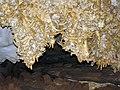 90 Helictites (travertine) 16 (8324757239).jpg