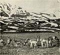 A'top o' the world - wonders of the Yellowstone dreamland (1922) (14760919441).jpg
