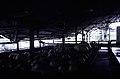 ASC Leiden - F. van der Kraaij Collection - 13 - 017 - The Firestone rubber plantation. Interior of the latex factory - Harbel, Montserrado county, Liberia - 1976.jpg