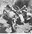 AWM 013973 1st Australian Mountain Battery in action, Buna.jpg