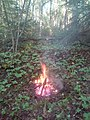 A bonfire in the wood. 01.jpg