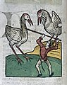 A man and two birds (storks?), woodcut, 1547 Wellcome L0029224.jpg