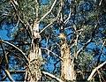 A mess of tree branches - Flickr - Matthew Paul Argall.jpg