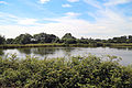 A pond with Canada Geese westwards outside the Woodland Trust wood Theydon Bois Essex England.JPG