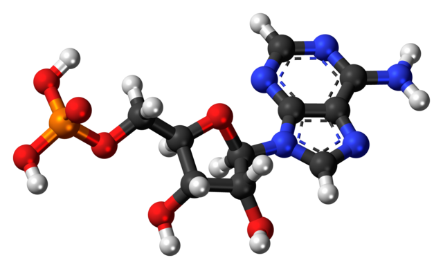 Adenosine monophosphate also contains some oxygen atoms (red) and a phosphorous atom (yellow). It is not living.