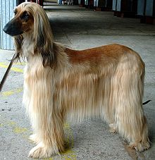 Gifts for Afghan Hound Dog Lovers