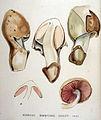 Agaricus — Flora Batava — Volume v19.jpg