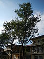 Agoncillo,batangasjf4726 33.JPG