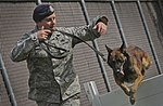 Air Force Security Forces train with K9 companions 130826-F-LX370-235.jpg