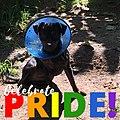 Aj the Pride of the dog.jpg