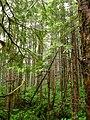 Alaska Rainforest Zipline.jpg