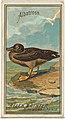 Albatross, from the Birds of America series (N4) for Allen & Ginter Cigarettes Brands MET DP828729.jpg