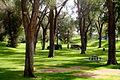 Albuquerque Roosevelt Park.JPG