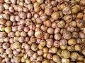 Allium cepa (Amaryllidaceae).jpg