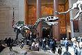 Allosaurus AMNH lobby.jpg