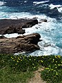 Along the Foreshore - Wollongong - New South Wales - Australia - 03 (11262956944).jpg