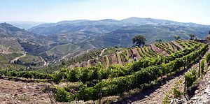Douro DOC - Image: Alto Douro (702994366)