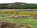 Am Bodach in Strathy Forest - geograph.org.uk - 1340418.jpg