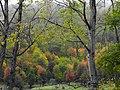 Amazing Fall In Chalus Way - panoramio (4).jpg