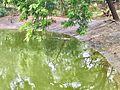 An Estuarine Crocodile sneaking in water at Indira Gandhi Zoological park.jpg