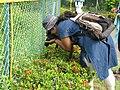 Ananya Mondal is shooting host plants of butterflies WLB IMG 0081 01.jpg
