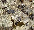 Anatase-Sagenite-Quartz-204059.jpg