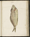 Animal drawings collected by Felix Platter, p1 - (6).jpg