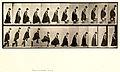 Animal locomotion. Plate 173 (Boston Public Library).jpg