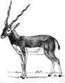 Antelope 1 (PSF).png