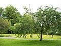 Apfelbaum - panoramio (1).jpg