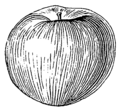 Apple (PSF).png