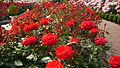 Aramaki rose park05s2400.jpg