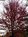 Arbre en automne (1).jpg