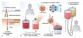 Architektur eines chimären Antigenrezeptors (CAR).webp