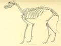 Archives du Museum d'histoire naturelle de Lyon (1872) Chien Égyptien de Rôda.png