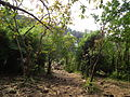 Around Athirappilly Falls during Dec2011 0436.JPG