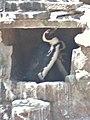Artis, Zoo, Dierentuin - panoramio (96).jpg